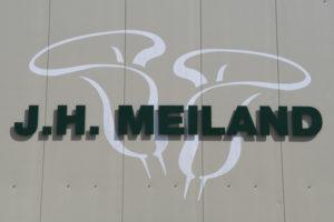 J.H. Meiland Calla's